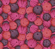 Sea Urchins Red