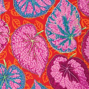 Philip Jacobs Big Leaf Pink